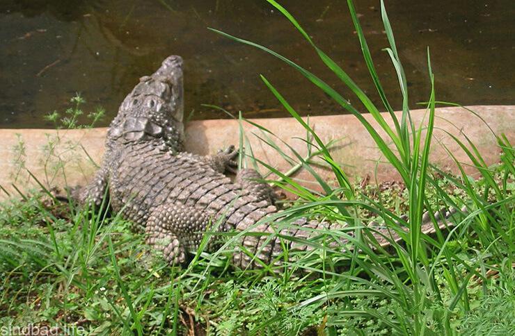 Змеиный парк в Найроби