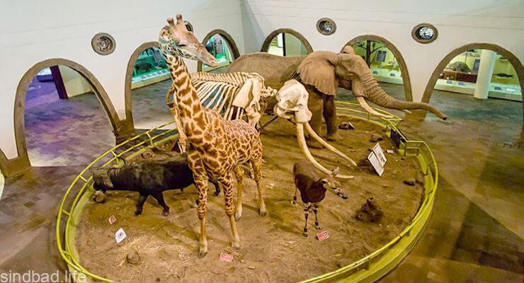 Национальный музей Кении выставка