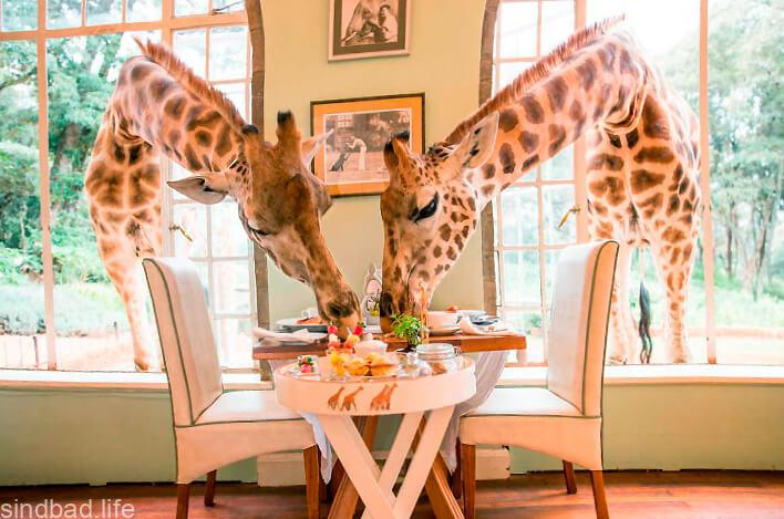 Усадьба жирафов фото