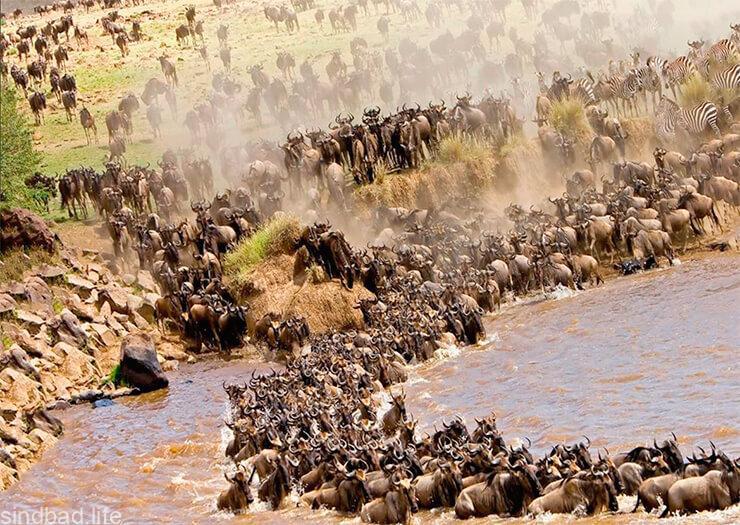 Фауна национального парка Масаи-Мара
