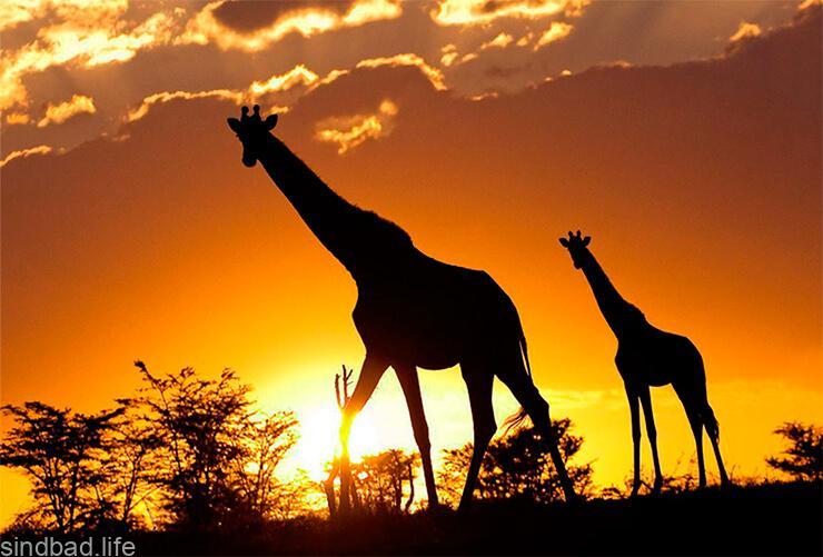 Животные заповедника Масаи-Мара