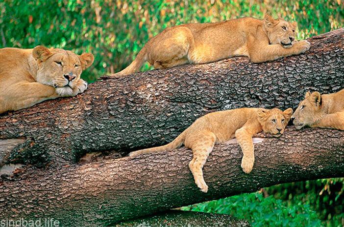 национальный парк Кении