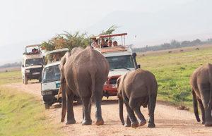 Национальный парк Амбосели