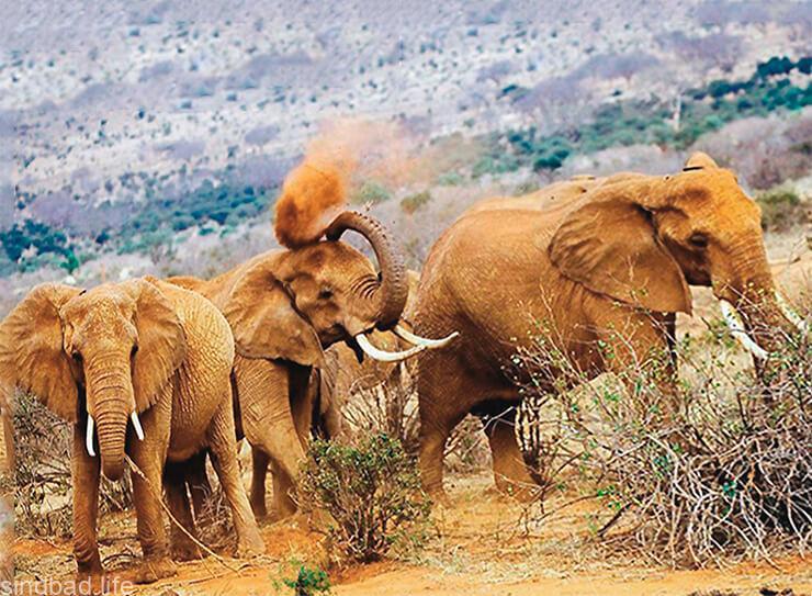 Национальный парк Амбосели фото