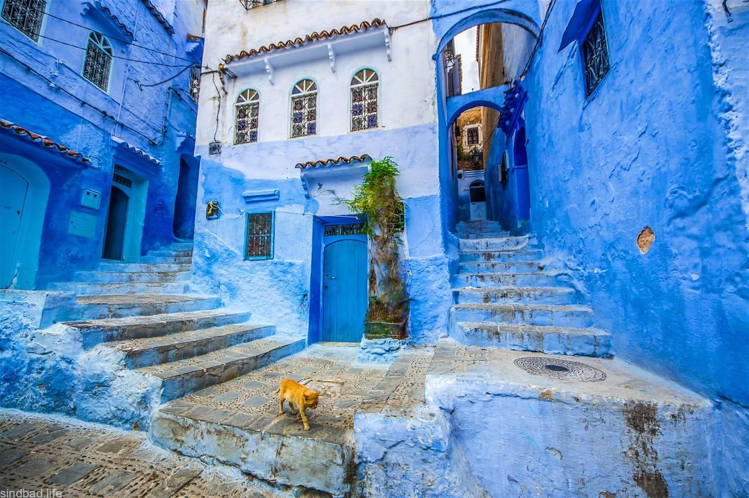 Голубой город Джодхпур фото