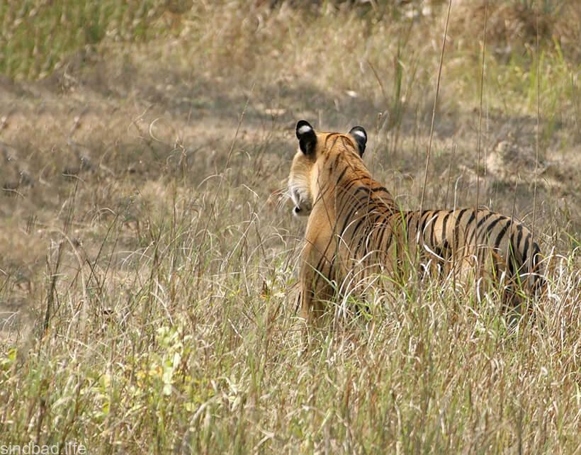 Изображение национального парка Перияр