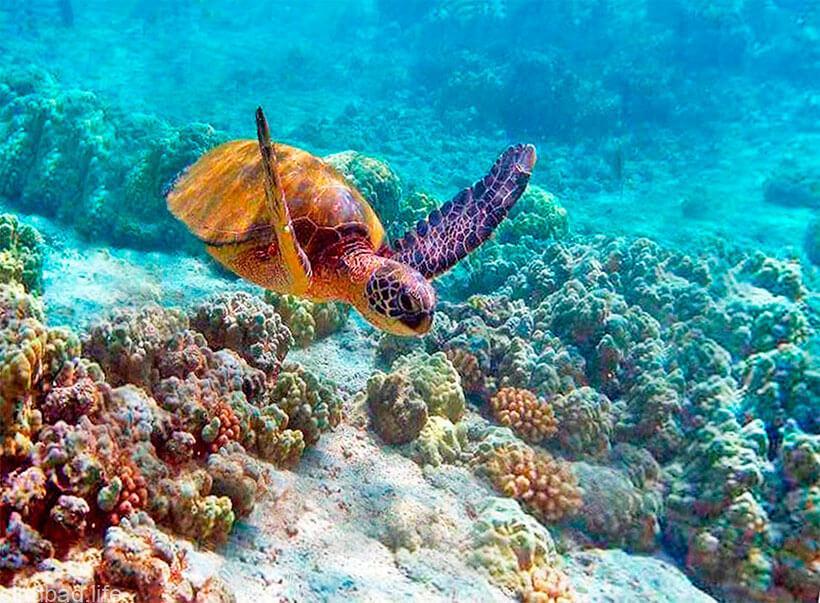 Национальный морской парк в Кении